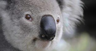 Kreativni dani Dorćolijade: Flora i fauna Australije