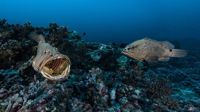 Festival podvodnog filma (foto: Laurent Ballesta)