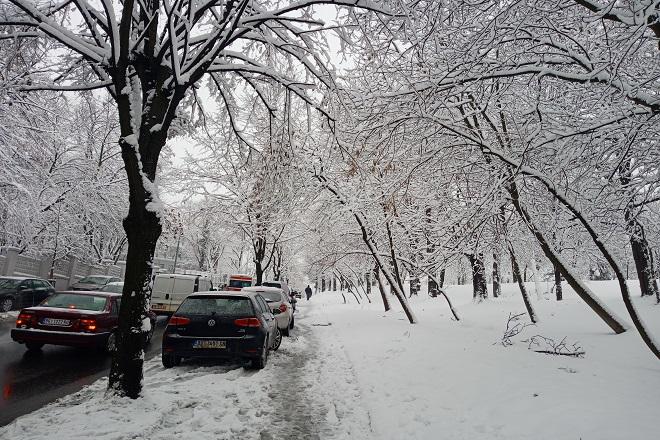 Sneg u Beogradu (foto: N. Mandić)
