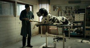 FEST 47: Dogman
