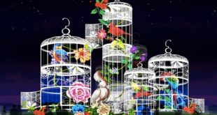 Sedam dana u Beogradu - 7-13. februar 2019: Kineski festival svetla