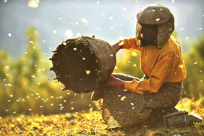 7 veličanstvenih: Zemlja meda