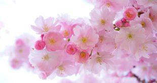 Sajam cveća