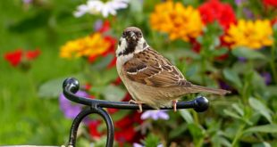Svetski dan vrabaca