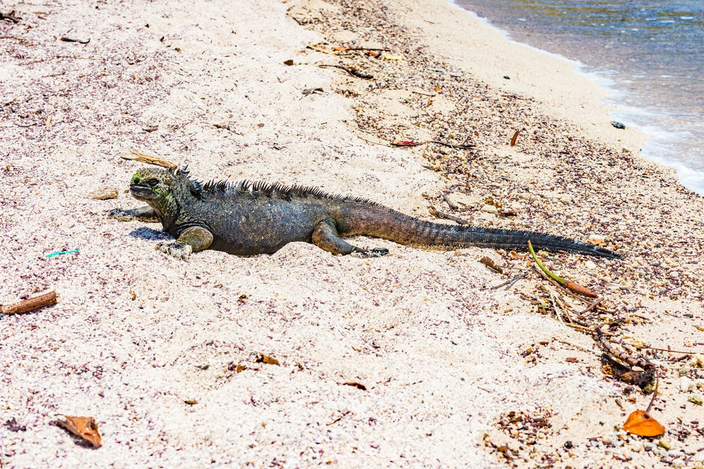 Galapagos (foto: Bojan Aleksić)
