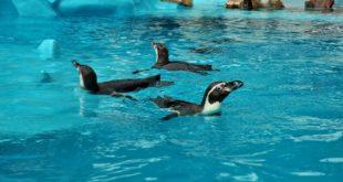 Sedam dana u Beogradu (6-12. jun 2019): Novi pinginarijum u Beo zoo vrtu