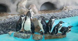 Pingvinarijum u Beo zoo vrtu (foto: Beo zoo vrt)