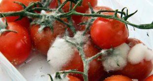 Istraživanje: Koliko (zaista) bacamo hranu?
