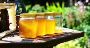 Sajam pčelarstva na Tašmajdanu