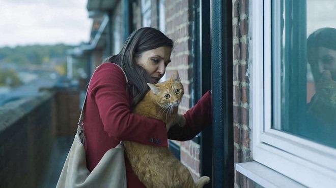 Sedam dana u Beogradu, 21-27. novembar 2019: 25. FAF - Mačka u zidu