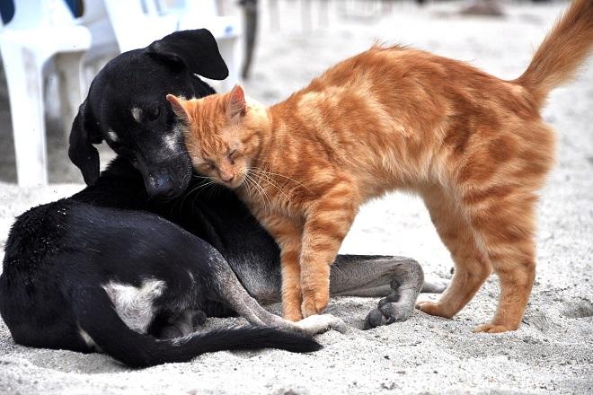 Zvezdara: Akcija besplatnog čipovanja, vakcinacije i sterilizacije napuštenih pasa i mačaka (foto: Maria Fernanda Perez / Pixabay)