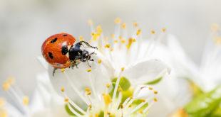 Proleće stiže, čudo života je svuda oko nas! (foto: Kookay/Pixabay)