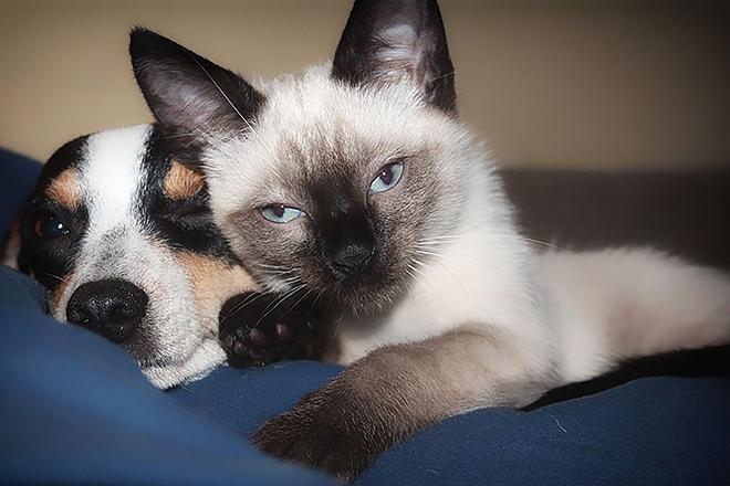 Kućni ljubimci, za sada bez ozbiljnog rizika (foto: joy617/Pixabay)