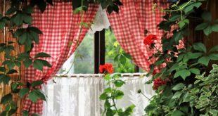 Za čistiji vazduh u domu - sobne biljke (foto: Pixabay)