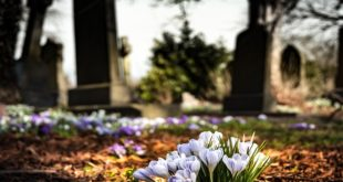 Vanredno stanje: I beogradska groblja u pripravnosti! (foto: Pixabay)