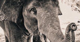 Beogradski zoo vrt otvoren za posetioce (foto: Pixabay)