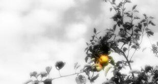 Psiholog o znatiželji: U kakvoj su vezi Adam i Eve sa Nobelom i Teslom (foto: Pixabay)