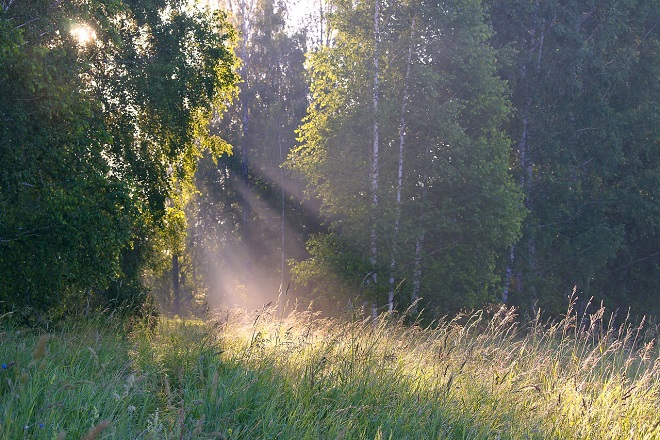 Da li znate... da je u Sibiru izmerena temperatura od 38 stepeni (foto: Pixabay)