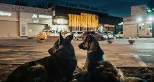BELDOCS 2020: Svemirski psi