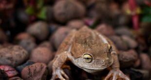 Da li znate... da je supermarketu u Velsu nađena egzotična žaba iz Kolumbije (foto: Pixabay)