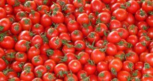 Da li znate... da nakupci plaćaju kilogram paradajza 10 dinara a da ga prodaju i do osam puta skuplje (foto: Pixabay)
