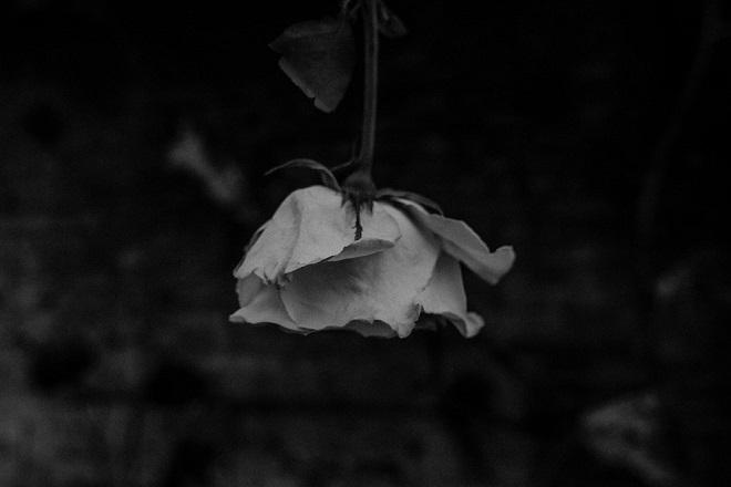 Sahrane i kremacije u Beogradu (foto: Flora Westbrook / Pexels)