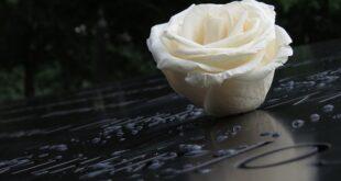 Sahrane i kremacije u Beogradu (foto: Pixabay)