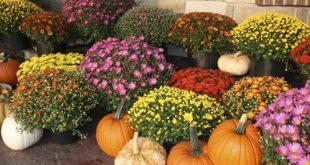 Sajam cveća Beogradska jesen u parku Manjež (fotografiju obezbedilo Udruženje cvećara Srbije)