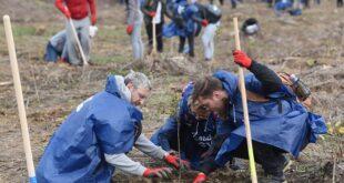 Zasadi drvo: Do marta 2021. novo drveće na 100 lokacija u Srbiji