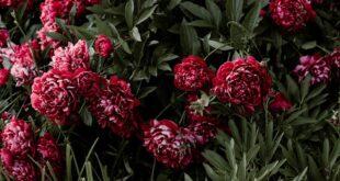 Sahrane i kremacije u Beogradu (foto: Pexels)