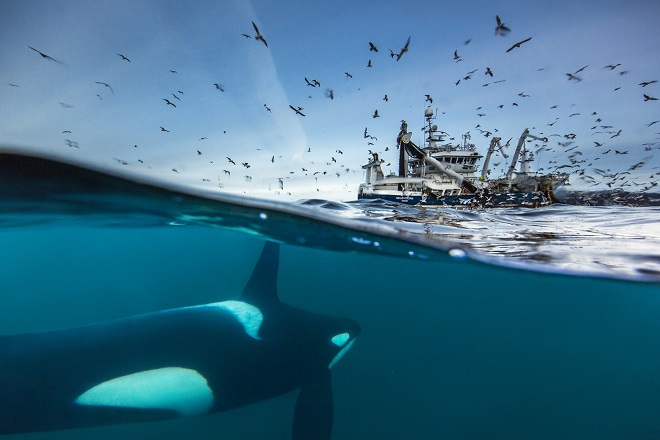 24. Međunarodni festival podvodnog filma: Orke
