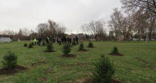 "Drvo za Beograd: U Beogradu posađeno 40 stabala (foto: JKP ""Zelenilo - Beograd"")"