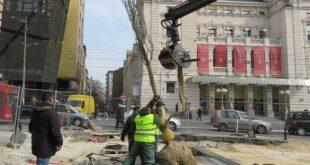 """Presađivanje stabala na Trgu republike (foto: JKP """"Zelenilo-Beograd"""")"""