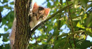 Animal Rescue Serbia: Pet godina spasavanja životinja (foto: Pixabay)