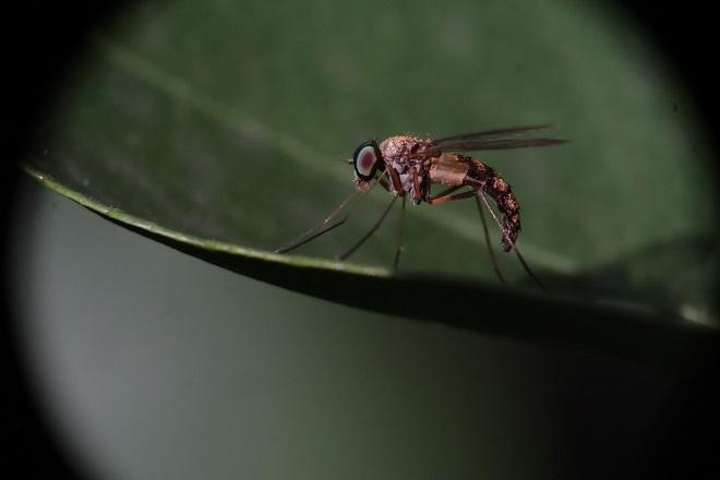 Suzbijanje komaraca u Beogradu (foto: Pixabay)