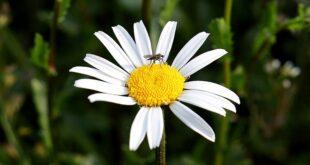 Zaprašivanje komaraca u Beogradu (foto: Pixabay)
