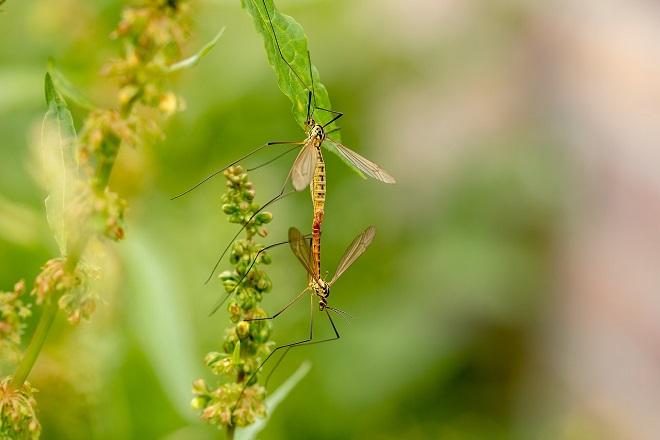 Akcija suzbijanja komaraca u Beogradu (foto: Pixabay)