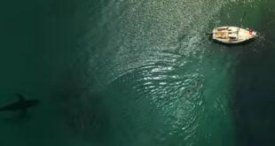 Novi filmovi u bioskopima: Velika bela ajkula