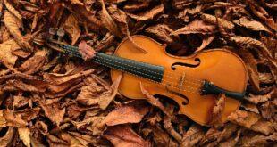 "25. Muzički susreti ""Jesen na Čukarici"" (foto: Jean-Louis Aubert / Unsplash)"