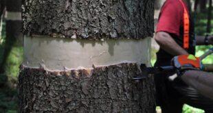 Kako prepoznati drveće pod stresom (foto: © BOKU Geomatics)